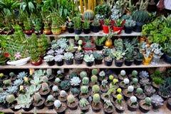 Variety Mini Plant royalty free stock photography