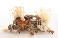 Free Variety Mushroom Stock Image - 7451631