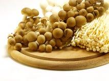 Variety of mushrooms Stock Photos