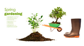 Variety of objects for spring planting on white Royalty Free Stock Image