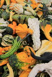 Variety Of Colorful Fall Gourds On Table At Market Royalty Free Stock Image