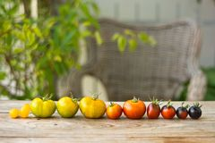 Variety Of Different Rare Tomatoes Royalty Free Stock Photos