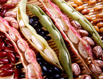Free Variety Of Dried Beans Royalty Free Stock Photography - 27961927