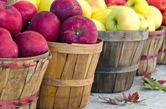 Variety Of Fall Apples Royalty Free Stock Photos