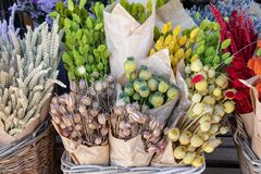 Free Variety Of Natural Plant Dried Flowers Home Decoration Eternal Flower Bouquets Of Wheat Spikelets, Poppy Heads Royalty Free Stock Photo - 144777535