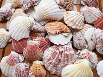 Variety Of Sea Shells Background Stock Images