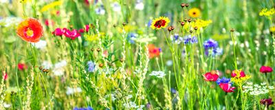 Free Variety Of Wildflowers And Native Herbs, Wildflower Meadow Stock Photography - 138206002