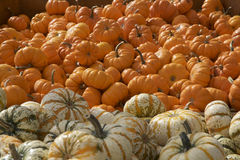 Variety of Orange and White Pumpkins and Gourds Stock Photos