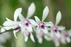 Variety of orchid. In the green garden Stock Image