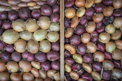 Variety of organic farm fresh onions in wooden box Royalty Free Stock Photos