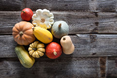 Variety of organic gourds, pumpkins, blue and kuri squashes Royalty Free Stock Photos