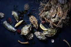 Variety of oysters with lemons in a wooden box. Top view. Royalty Free Stock Photos