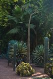 Variety of palm, cactus and other trees at Majorelle garden in Marrakech, Morocco Royalty Free Stock Photography