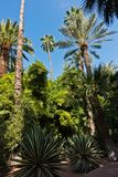 Variety of palms and other trees against blue sky at Majorelle garden in Marrakech, Morocco Stock Images