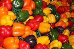 Variety of peppers in all colors royalty free stock photo