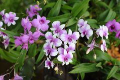 A variety of pink orchids background Royalty Free Stock Photos