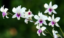 Variety of plant organisms on the island of Bali. Nature of Indonesia. Orchid flowers in the garden stock image
