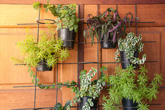 Variety of plants in the pots on the black rack Royalty Free Stock Photos