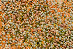 Variety of pulses essential for human life Stock Photography