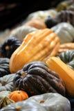 Variety of pumpkins Stock Photo
