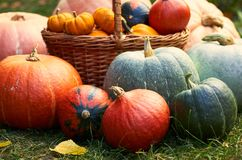 Variety of pumpkins, autumn harvest composition with fallen leaves, copy space, crop royalty free stock photo