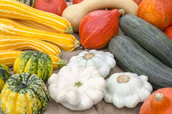 Variety of pumpkins Stock Image