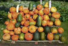 Variety of pumpkins and squashes Stock Photo