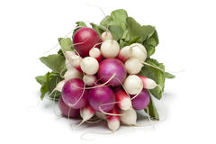Variety of radishes. On white background Royalty Free Stock Photo