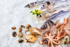 Variety of Raw Fish and Shellfish on Bed of Ice. High Angle Still Life of Variety of Raw Fresh Fish and Shellfish Chilling on Bed of Cold Ice in Seafood Market Royalty Free Stock Photo