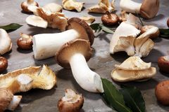 Variety of raw mushrooms on grey table. oyster and other fresh m Royalty Free Stock Images