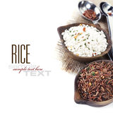 Variety of rice Stock Photos