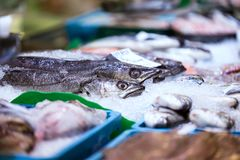 Variety of sea fishes on the counter in a fish shop in the market. Close-up of variety of sea fishes on the counter in a fish shop in the market stock photography