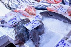 Variety of sea fishes on the counter in a greek fish shop. Concept- healthy food, fresh seafood stock images