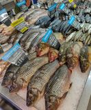 Variety of sea fishes on the counter in a greek fish shop Royalty Free Stock Images
