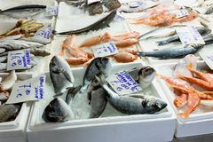 Variety of sea fishes on the counter in a greek fish shop. Concept- healthy food, fresh seafood royalty free stock images
