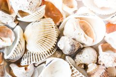 A variety of sea shells. As a background stock photos