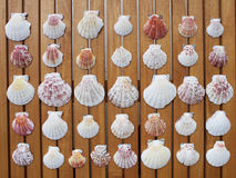 Variety of sea shells background Stock Image