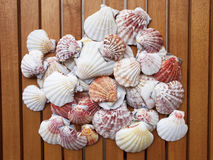 Variety of sea shells background Stock Photography