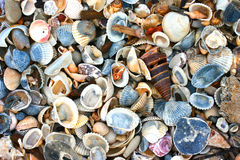 Variety of sea shells Royalty Free Stock Photography