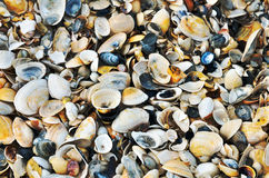 Variety of sea shells from beach Stock Image