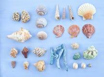 Variety of sea shells Royalty Free Stock Image