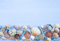 Variety of sea shells Stock Image