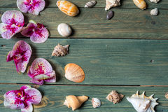 Variety of sea shells Stock Photos