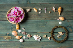 Variety of sea shells Royalty Free Stock Images