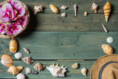 Variety of sea shells Stock Images