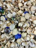Variety of sea shells and stars Stock Photo