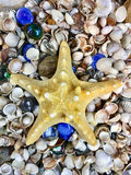 Variety of sea shells and stars. A variety of sea shells and stars Stock Images