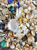 Variety of sea shells and stars Royalty Free Stock Images