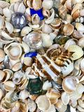 Variety of sea shells and stars. A variety of sea shells and stars Royalty Free Stock Images