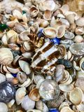 Variety of sea shells and stars. A variety of sea shells and stars Royalty Free Stock Photo